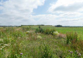 ruimtelijke plannenbomb-polder risicomanagement biodiversiteit financieel adviseur beleidsplanbezuinigen