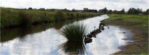 weerlanerpolder ruimtelijke plannenrisicomanagement biodiversiteit financieel adviseur beleidsplanbezuinigen